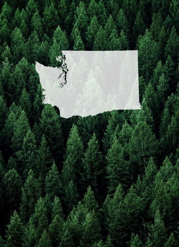 washington state with trees